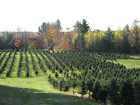 Hall's Christmas Tree Farm in the Autumn